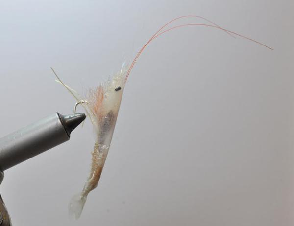 Bay anchovy fly